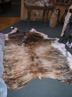 western collectibles-western calf cowhide 34